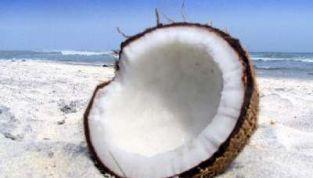 Cocco, il frutto dell'estate