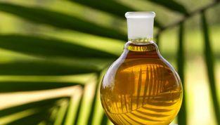 Olio di palma, cosa c'è dietro la sua produzione?
