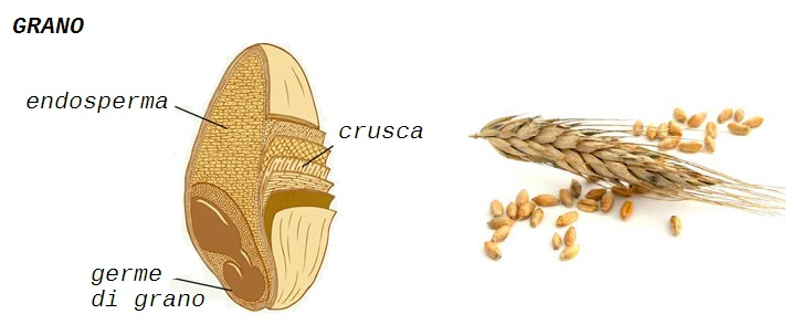 Tipi di farine quali sono e quando usarli