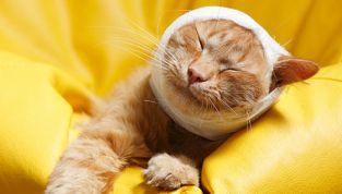 Soccorso stradale obbligatorio per animali feriti