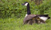 Istinto materno: un qualcosa di innato che viene attivato da diversi fattori