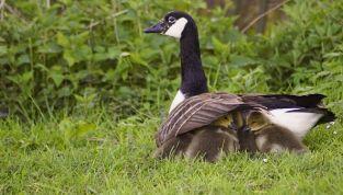 Istinto materno: cos'è e cosa lo provoca