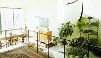 Combattere le sostanze nocive che ci sono in casa con le piante