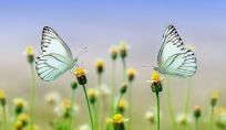 Eco Mestruazioni: consigli green per un ciclo mestruale a impatto zero