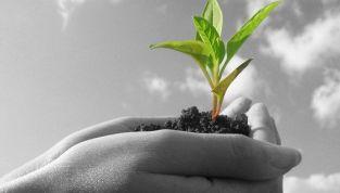 10 consigli per vivere green