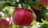 Esercizi per il fisico a mela