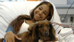 Animali domestici in ospedale