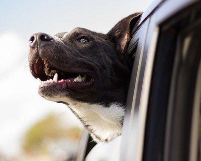 Viaggiare in auto col cane: consigli per una vacanza serena
