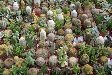 Piante succulente giugno il mese dedicato a queste for Piante grasse succulente