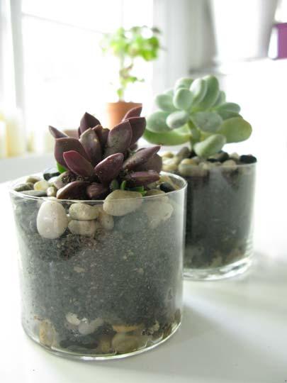 Composizione Piante Grasse In Vaso Di Vetro.Di Piante Grasse In Vasi Di Vetro Cheap Creativo Stile Vasi Di