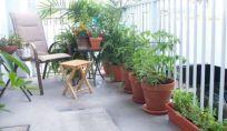 Come prendersi cura delle piante durante le vacanze, per evitare che muoiano