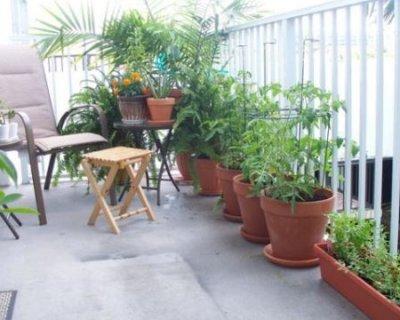 Prendersi cura delle piante quando si è in vacanza