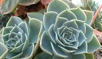 Piante Grasse: cactus e succulente