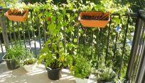 Come proteggere le piante del terrazzo o balcone durante l'autunno e l'inverno