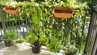 Preparare le piante per la stagione fredda