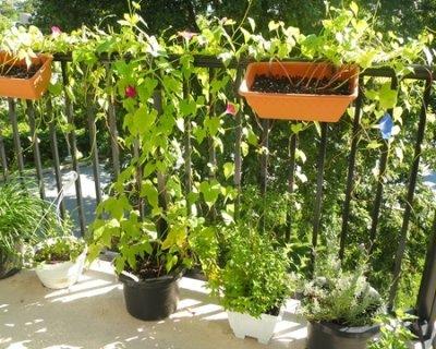 Come proteggere le piante del terrazzo o balcone durante l 39 autunno e l 39 inverno - Piante per il terrazzo ...