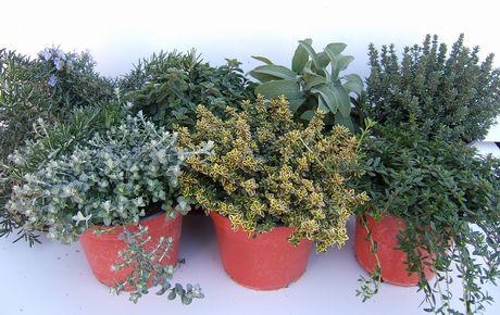 Come proteggere le piante del terrazzo o balcone durante l for Piante da esterno invernali