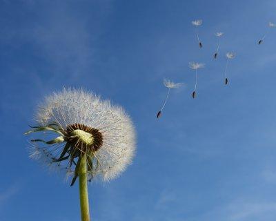 Kate Middleton e la gonna a pieghe sollevata dal vento