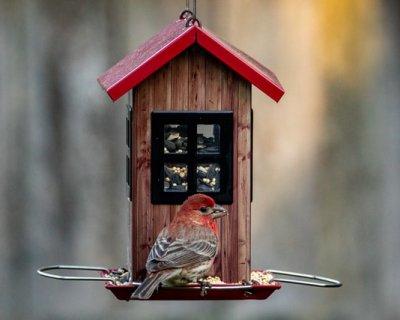 mangiatoia per uccellini fai da te con materiale di riciclo
