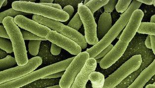 """Citomegalovirus: l'infezione """"parente"""" degli herpes"""