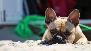 Spiagge per cani: la top 10 italiana