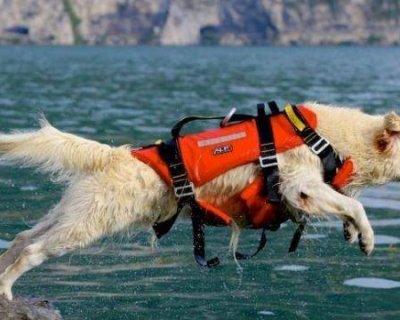 Cani bagnino, gli angeli dell'acqua