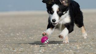 Come organizzare le vacanze con gli animali domestici