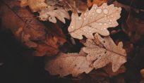 I profumi donna, le fragranze per l'autunno