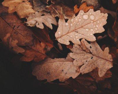 Profumi donna, le fragranze d'autunno