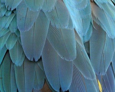 Le piume sono la nuova moda dell'inverno 2015