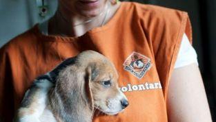 Il rapporto dei preadolescenti con gli animali