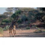 Selous Game reserve - Tanzania
