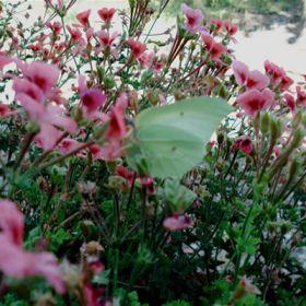 Farfalla - Inviata da: Carmen