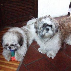 Willy e Skubi - Inviata da: Giordana